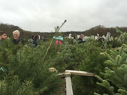 Christmas Trees for sale near St Albans