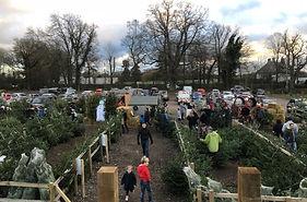 Christmas Trees retail Berkhamsted near St Albans