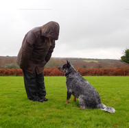 dog exercise fields, cornwall
