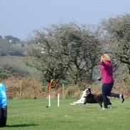 Hoopers dog training, Cornwall