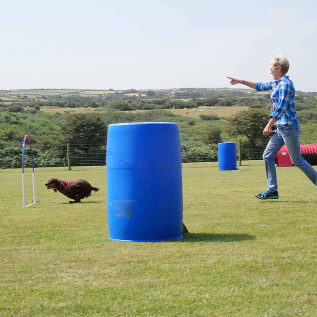 Hoopers dog training, Cornwall