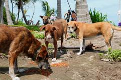 pups eatting.jpeg