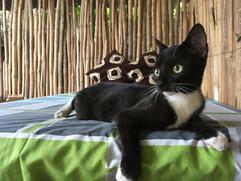 BW cat.jpeg