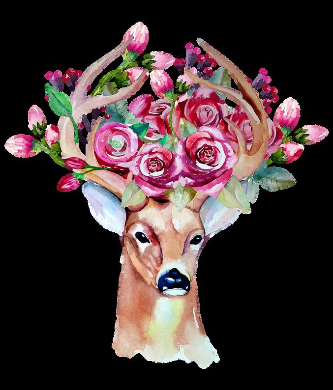 deer wi