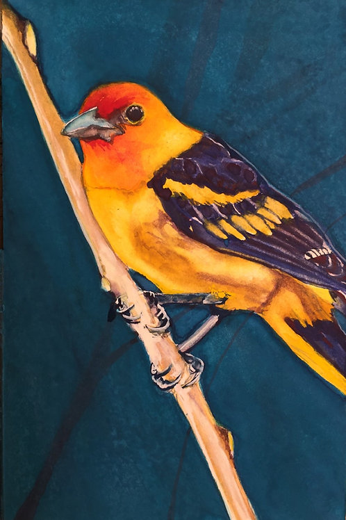 Tanager's Twilight (Western Tanager)