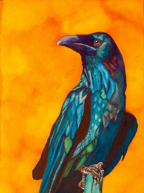 Rhapsody in Blues (raven)
