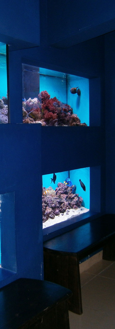 acvariu-muzeul-delta-dunarii-tulcea.jpg