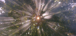 Trees, sunlight and woodsmoke