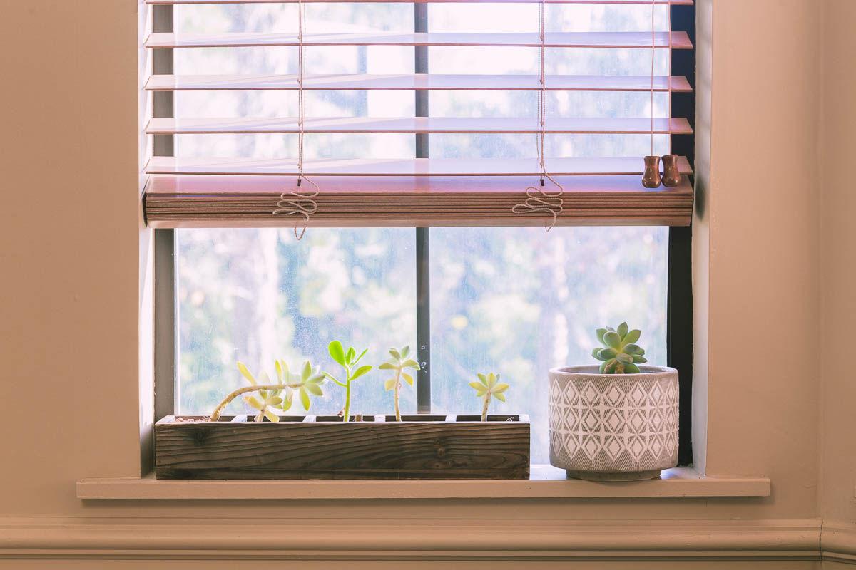 plants-on-window