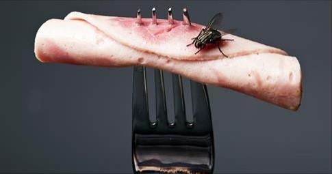 lifeline acupuncture_fly_food.jpg