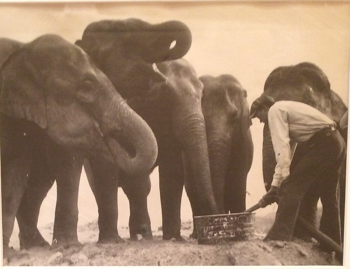 """My Thirsty Friends"" C. 1935 Photograph"