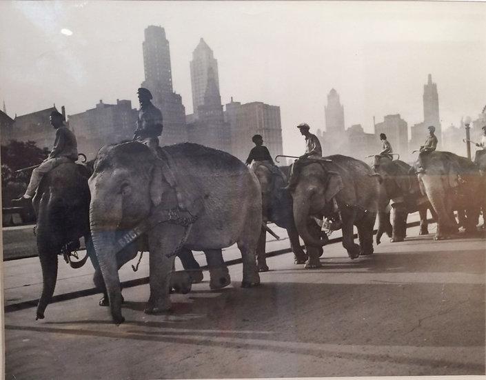 """Safari on the Boulevard"" c. 1943 Photograph"