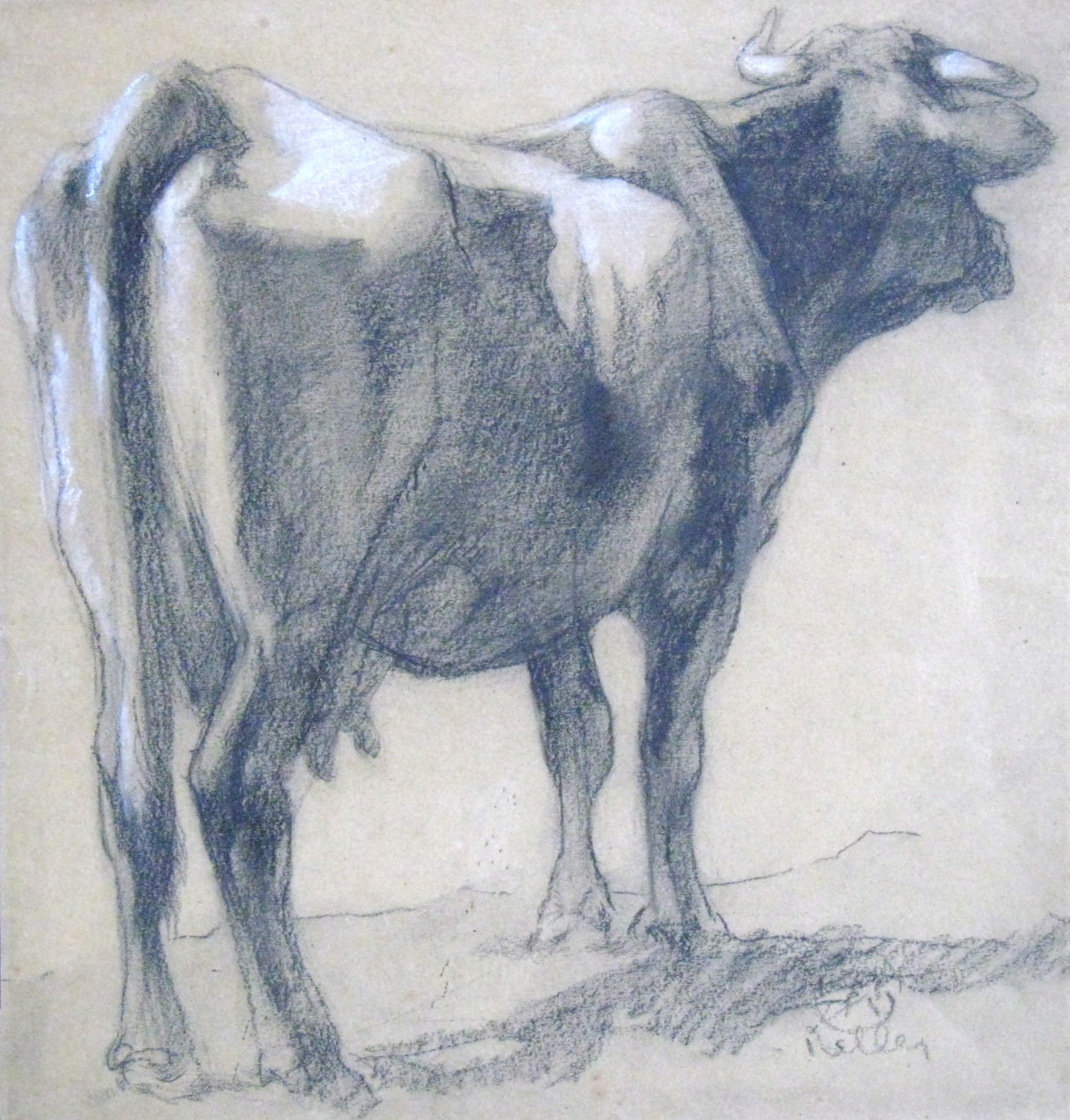 """Study of a Cow"""