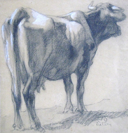 """""""Study of a Cow"""""""