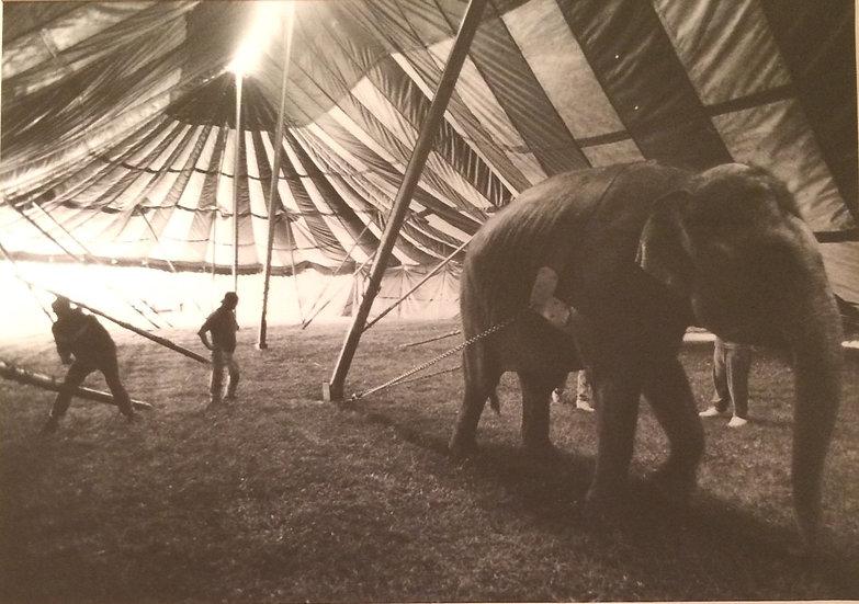 """Elephants Under Big Top"" C. 1991 Photograph"