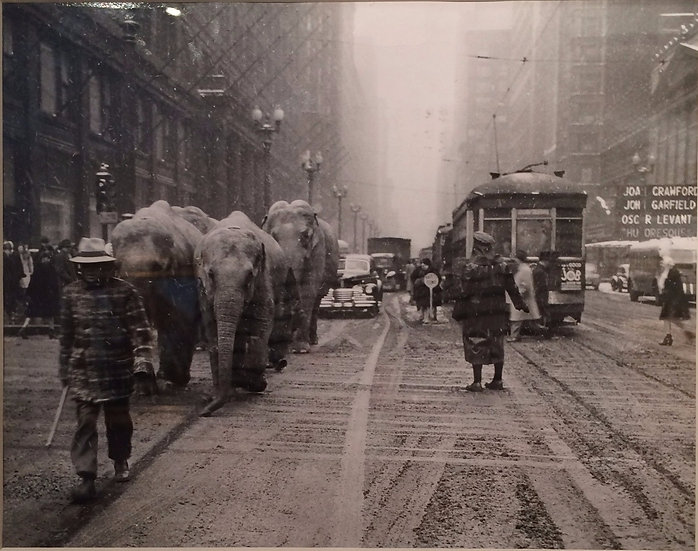 """New York  Elephants on the Street"" c. 1940  Photograph"