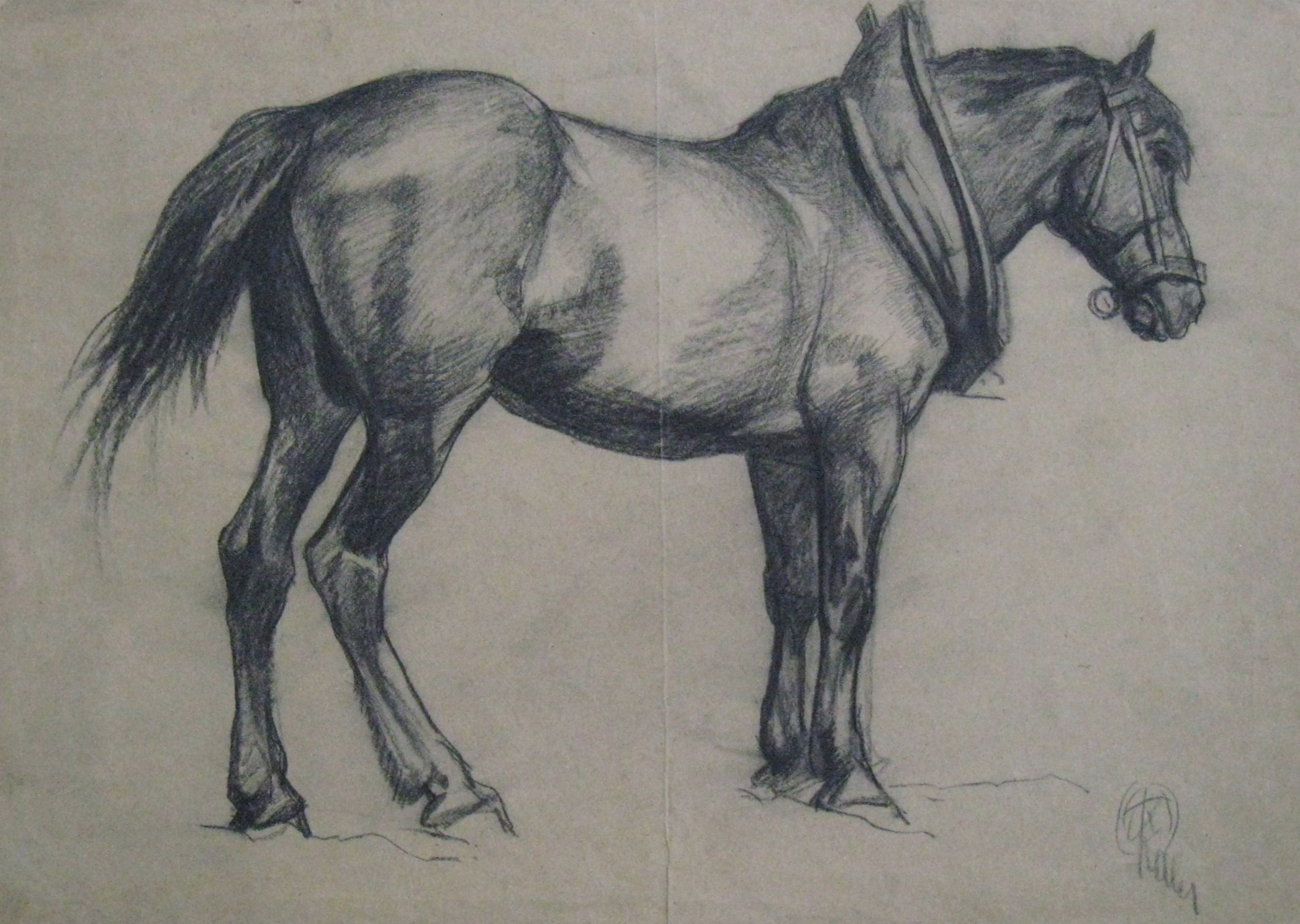 """Study of a Horse"""