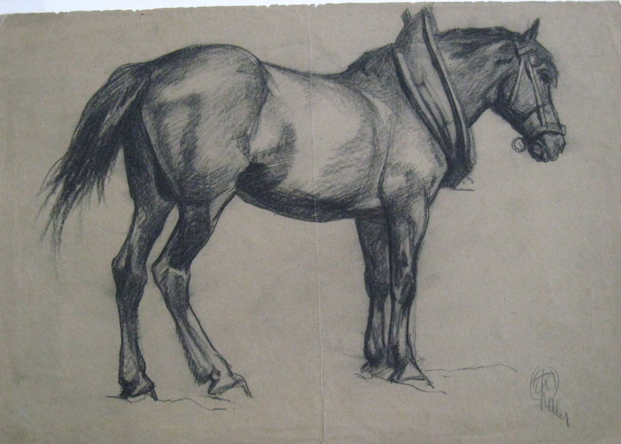 """""""Study of a Horse"""""""