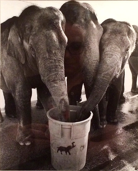 """Thirsty Elephants"" Photograph"