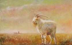 """A Goat"""