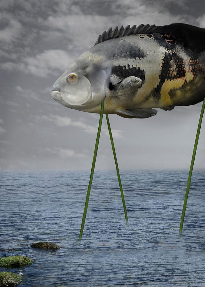 Fish waits for human