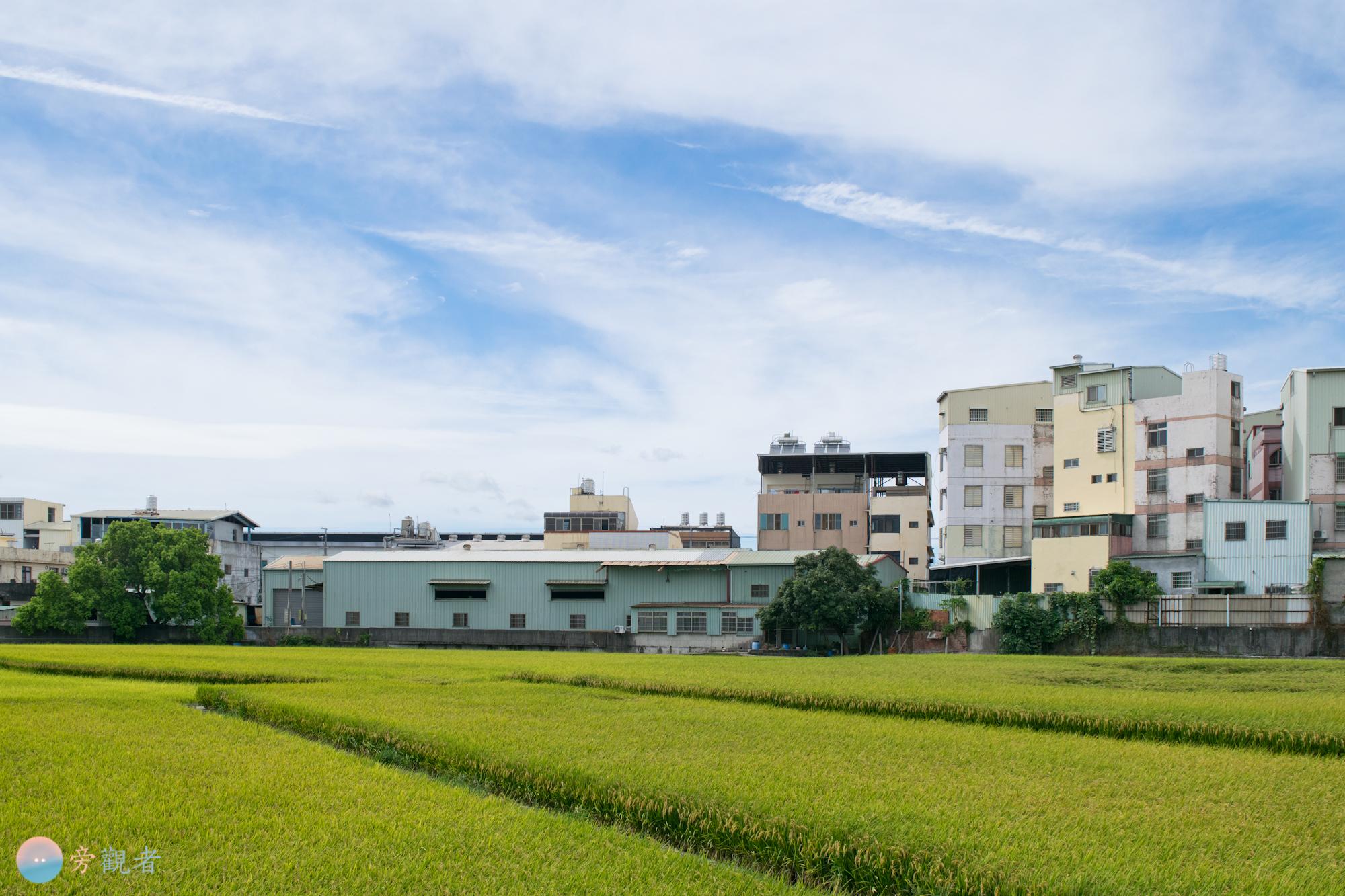 位於商業店鋪、住宅樓房和工廠之間的稻田。台中大里