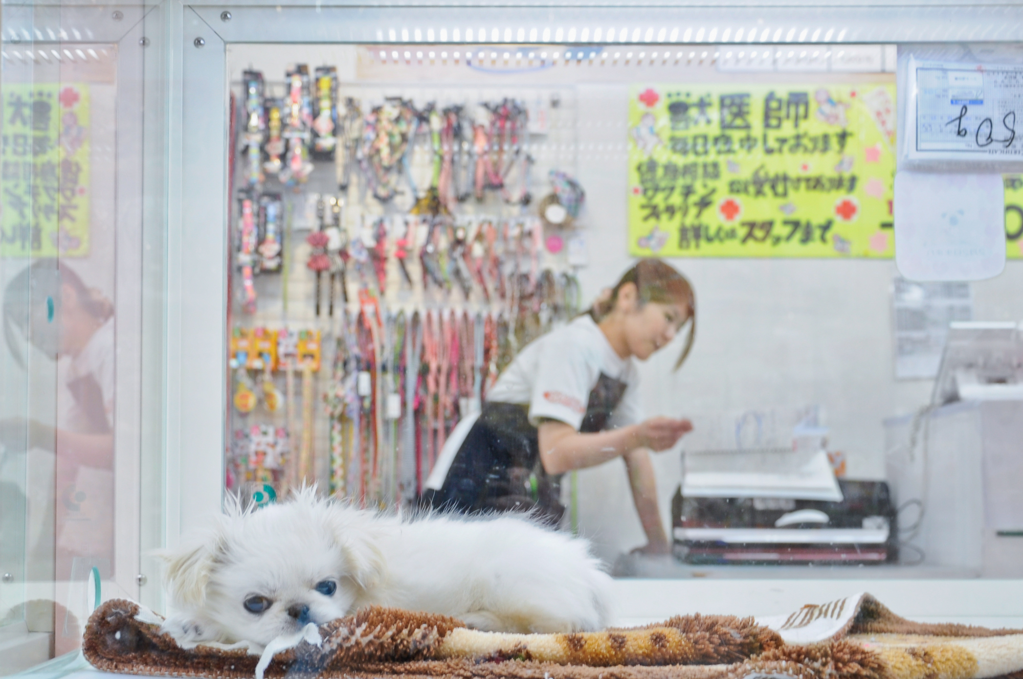 日本的狗兒