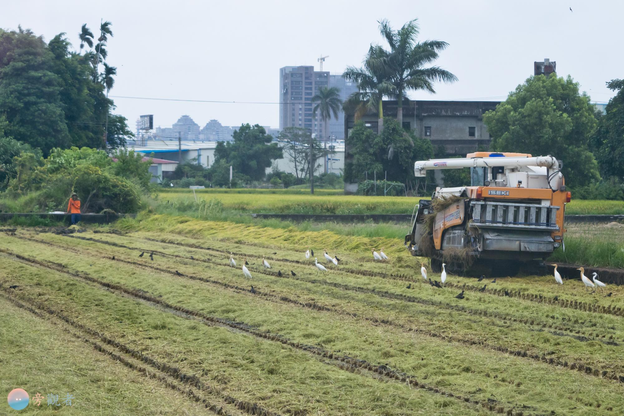 一台收割機在田裡收割稻米。台中大里