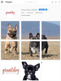 GreatDogSupplies Instagram Starting Billboard