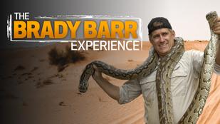 The Brady Barr Experience