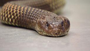 OATF206_Snake.jpg
