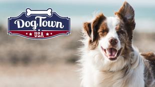 Dogtown USA