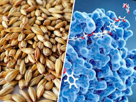 Enzymes vs.Orge maltée