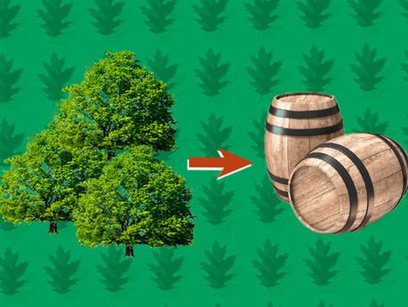 Le chêne: types, origines et goûts