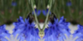 Kornblumen-Longshirt NYOTA mit künstlerischem Stoffdruck