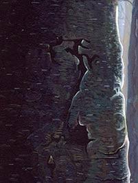Dark-Tree.jpg