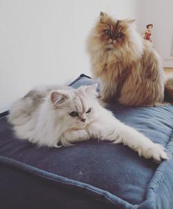 Musset, 2 ans et Léonore, 3 ans
