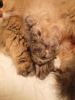 _Douchka + chatons-naissance.jpg