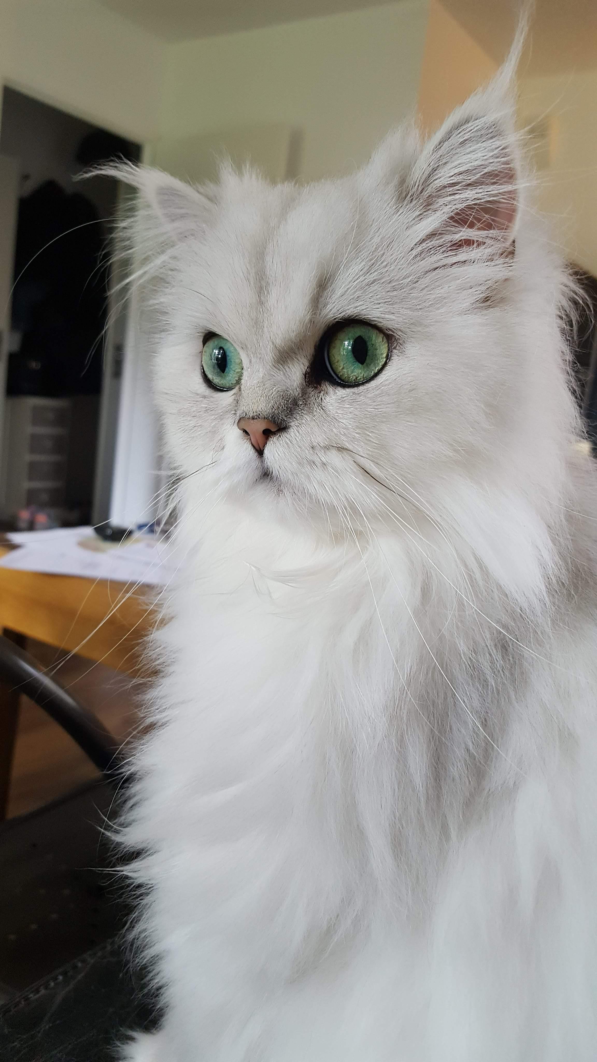 Maïa, 2 ans