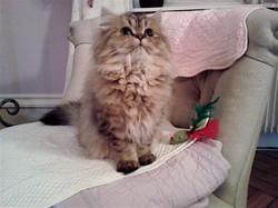 Leeloo, 5 mois