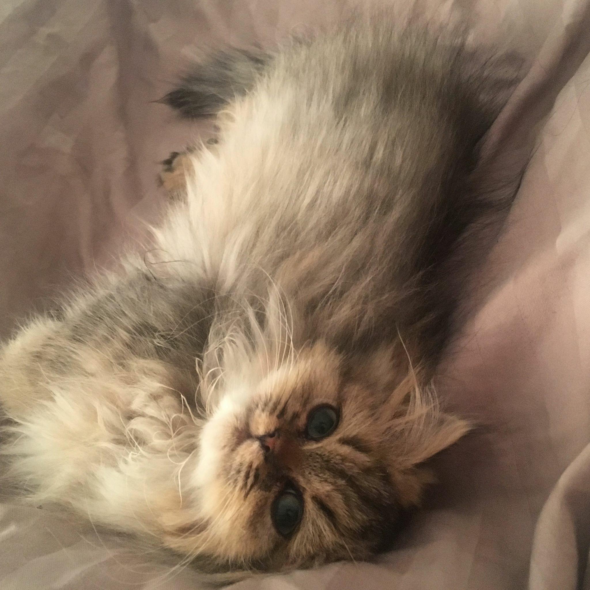 Nell, 4 mois