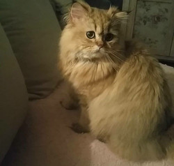Léo, 10 mois