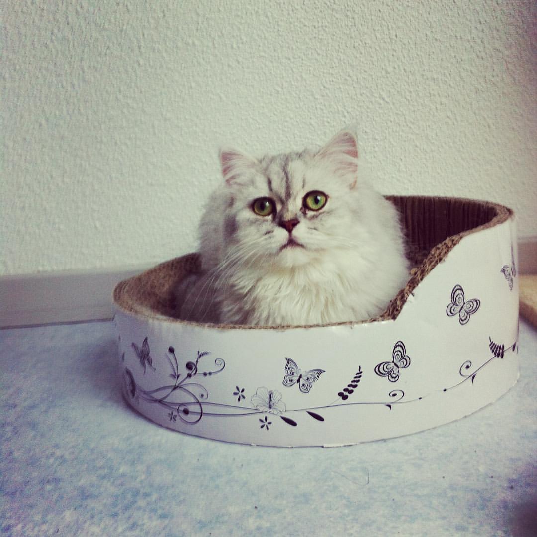Lyrica-Bella, 1 an