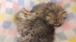 Nouko et Nayouki, 3 mois