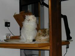 Kyiu + Sanzo2005_2.jpg