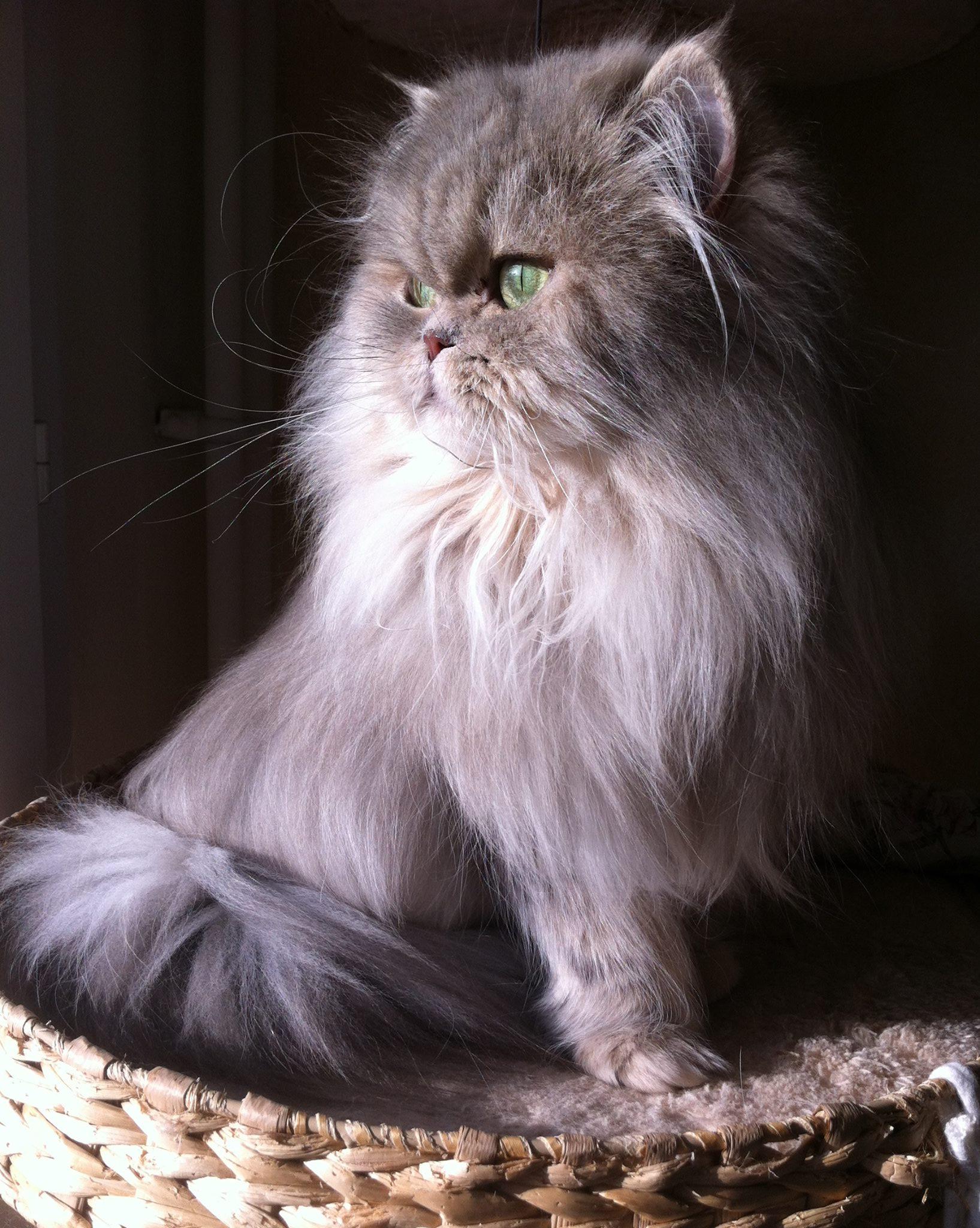 Irina, 2 ans