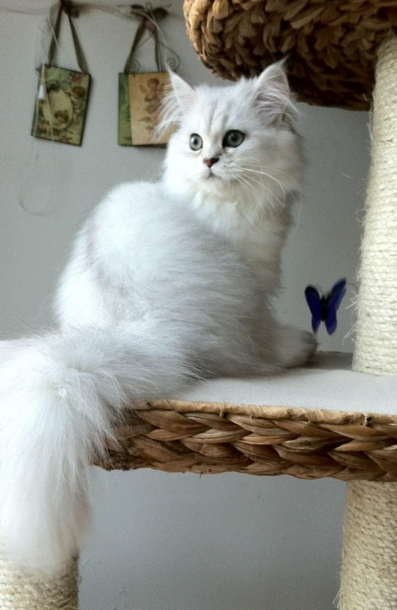 Léonore, 5 mois