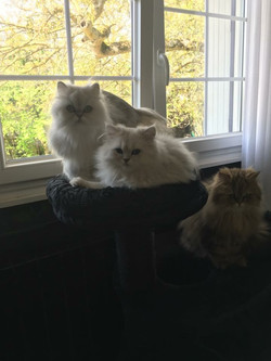 Ladislas, 10 , Jade et Jaguar, 1 an