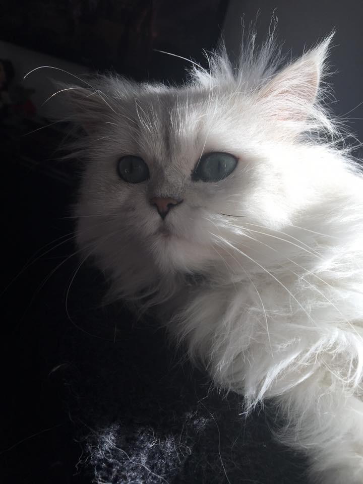 Ladislas, 2 ans
