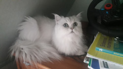 Maïa, 4 ans